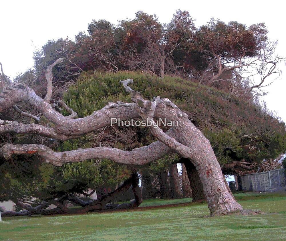 Wind Blown Tree by PhotosbyNan
