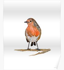 Red Robin illustration in watercolour Poster
