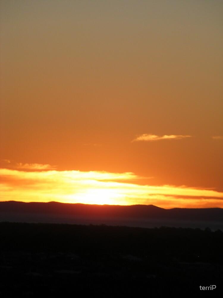 Morning Glory by terriP