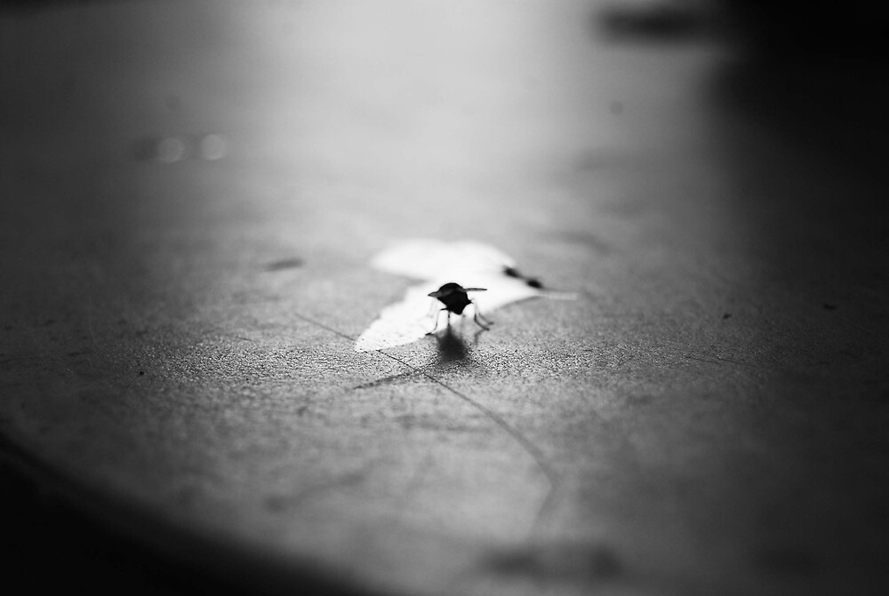 as a fly by darlingdogma
