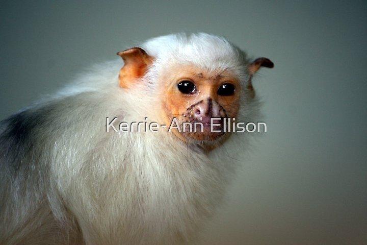 Silvery Marmoset  by Kerrie-Ann Ellison