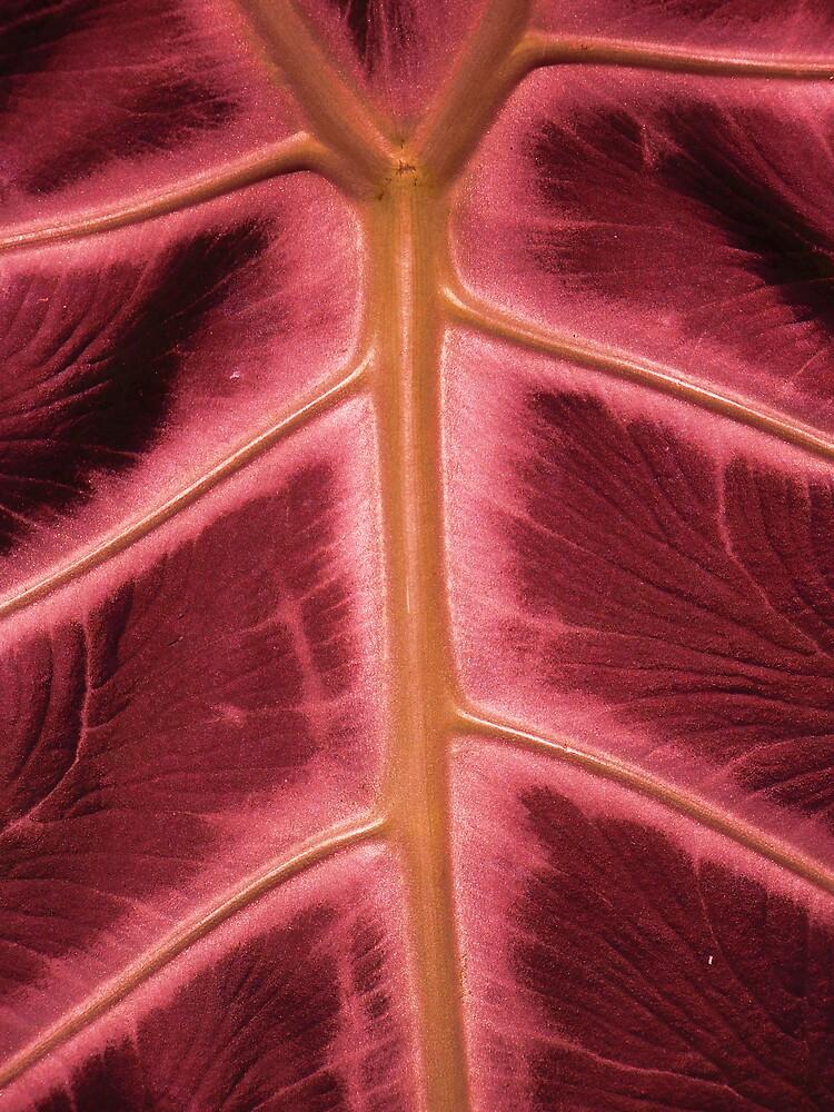 Anatomy? by Michael Keller