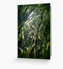 Closeup of moss on tree branches in a dark forest glowing in sunlight art print Greeting Card