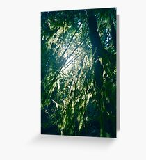 Sunlight through mossy tree branches in a forest art print Greeting Card