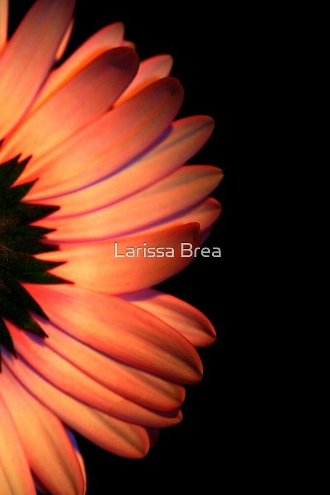 Prima Ballerina by Larissa Brea