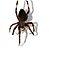 Your Favorite Arachnid Image - Arachnids