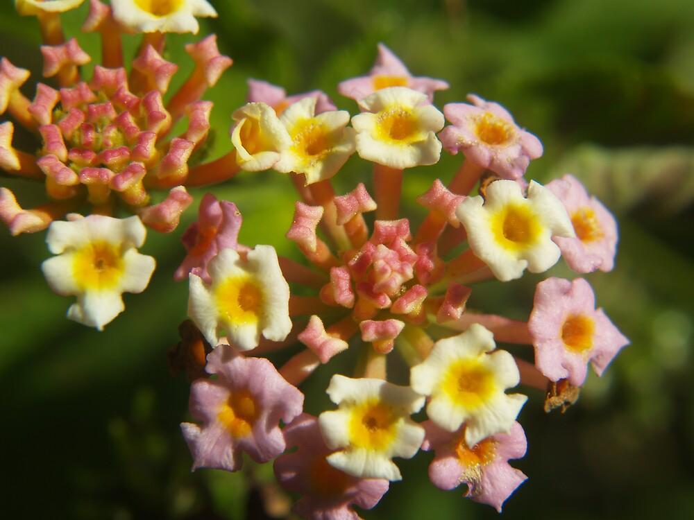 flowers by Ben  Hawthorn