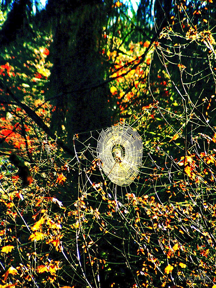Spider Web Amongs The Color by Kat Miller