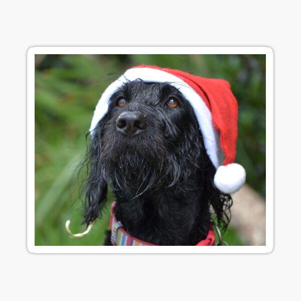 Christmas labradoodle Sticker