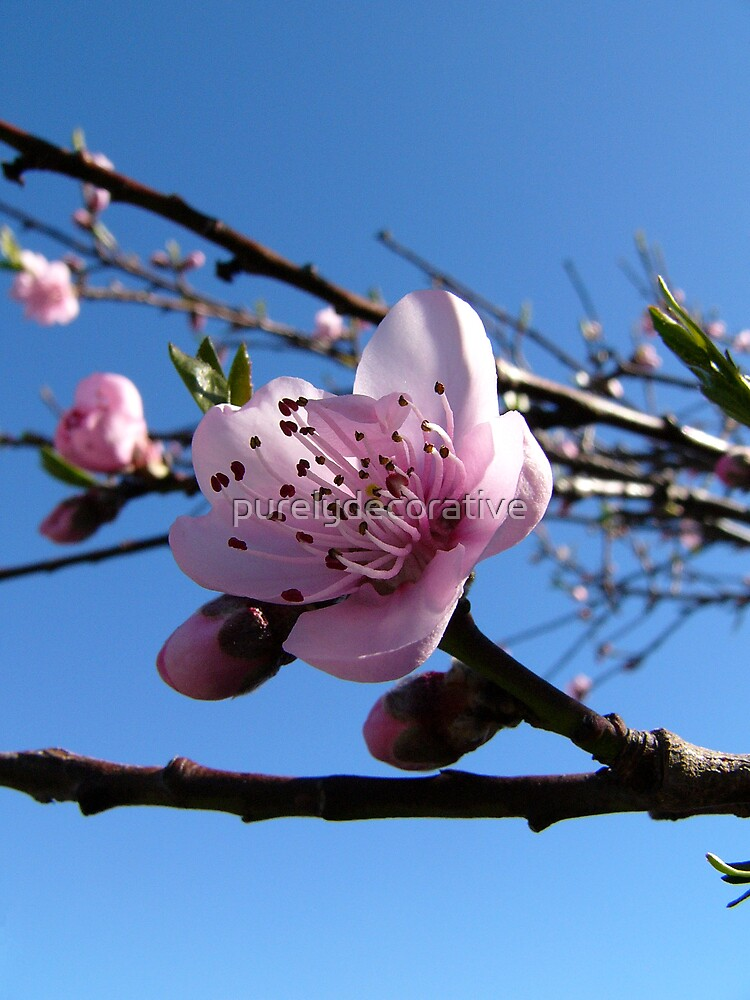 Nectarine to be... by purelydecorative