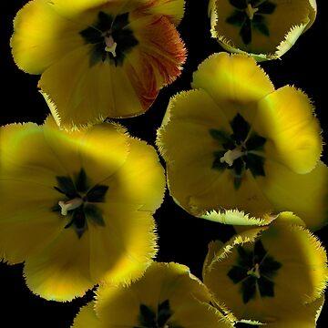 Tulip Daydream Dark Floral by LindasPhotoArt