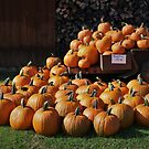Pumpkin Fest by RVogler