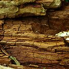 Wood Texture #2 by Trevor Kersley