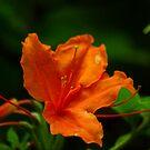 Orange by Trevor Kersley