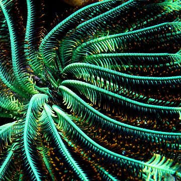 Green Feather star by neoniphon