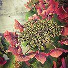 Autumn Hydrangea by Barbara Wyeth