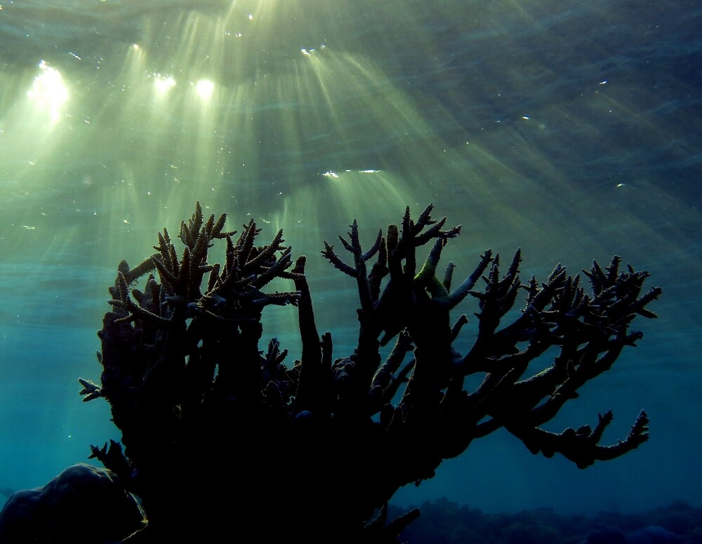 Late light  by Reef Ecoimages