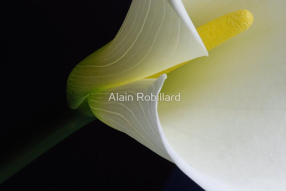 Guidance by Alain Robillard