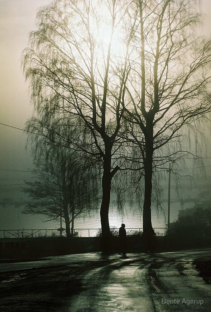 Trees in black and white  by Bente Agerup