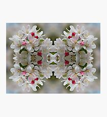 Tri-Blossom Patterns Photographic Print