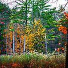 Fall Colors by Zohar Lindenbaum
