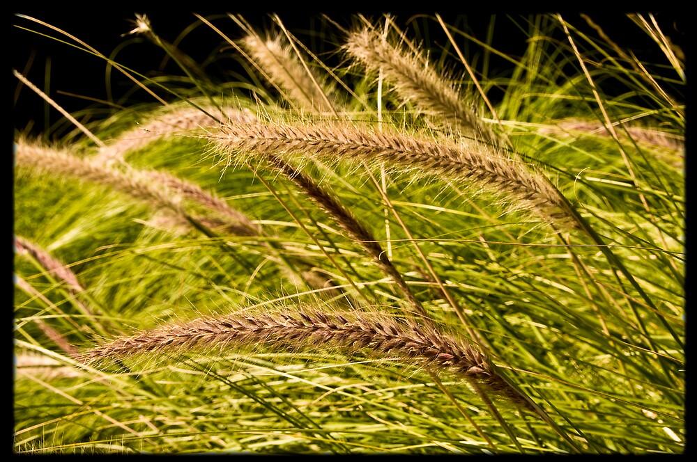 grass by Martin Hudec