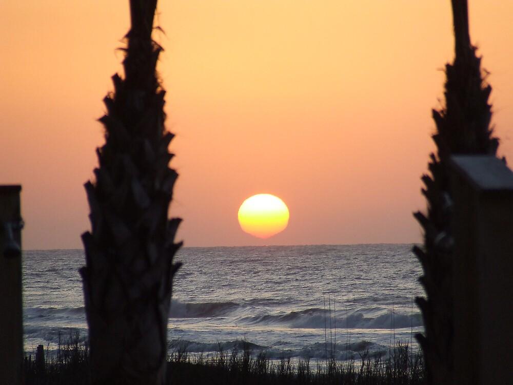 Paradise Sun Rise  by wldman68