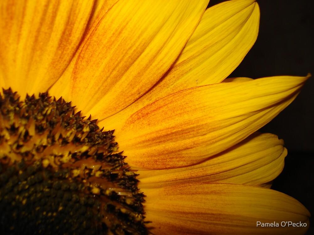 Sunny Flower by Pamela O'Pecko