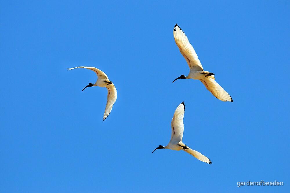 Triology of Flight by gardenofbeeden