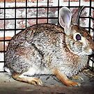 Grateful Bunny by Glenna Walker
