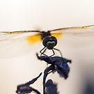Wings by Yana Art