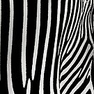 Zebra Black And White Natural Design by EllenDaisyShop