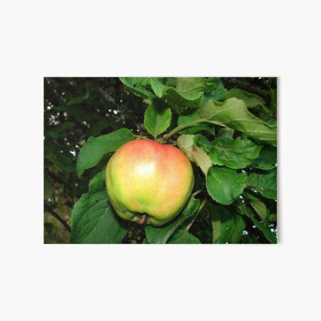 Apple on the branch Art Board Print