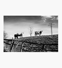 staringlandscape Photographic Print