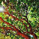 Up A Tree by Angela Treat Lyon