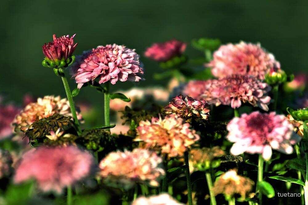 florecita rokcera 12 by tuetano