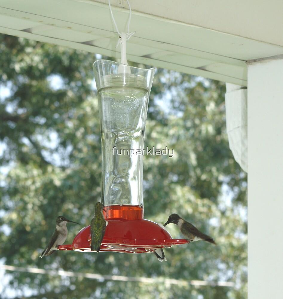 Hummingbirds by funparklady