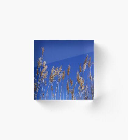 Pampas against sky blue !  Acrylic Block
