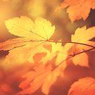 « Autumn leaves have arrived » par Philippe Sainte-Laudy