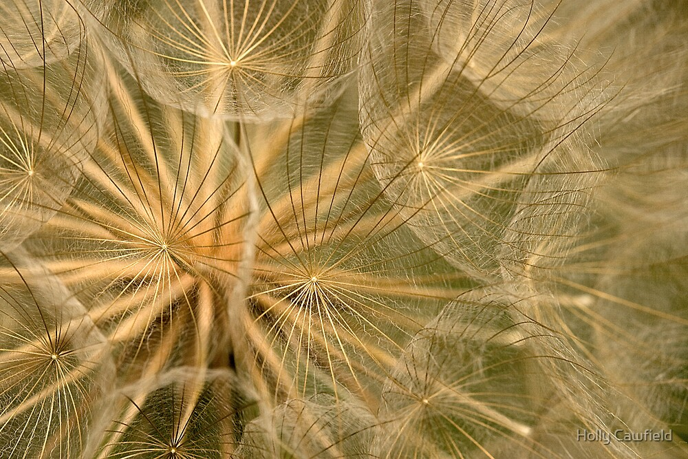 Delicate Seedhead by Holly Cawfield