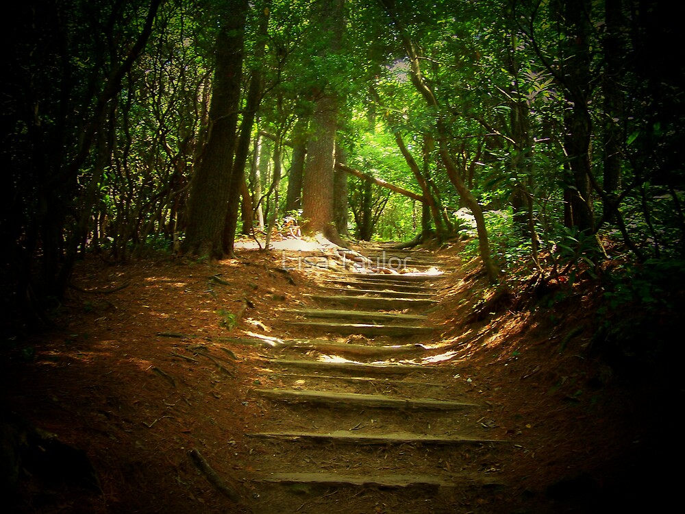 Wooden Steps by Lisa Taylor