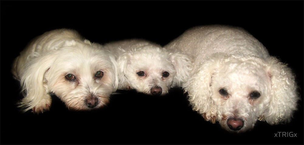 My Trio by xTRIGx
