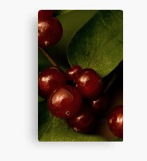 Shining Berries Canvas Print