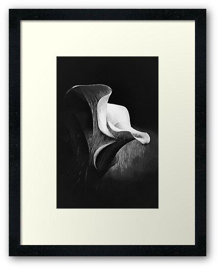 Arum by Philippe Sainte-Laudy