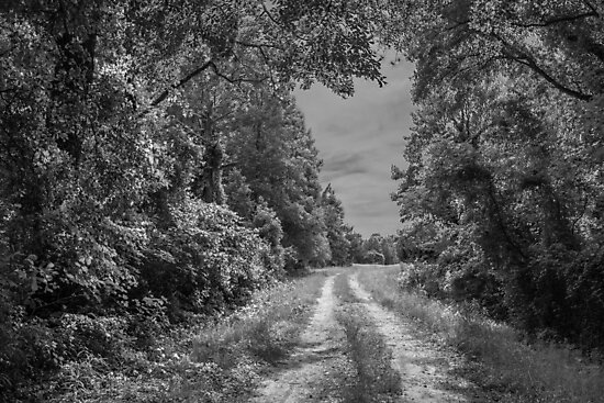 On A Country Road: IR by Susan Nixon