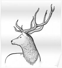 Red Stag Poster