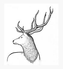 Red Stag Photographic Print
