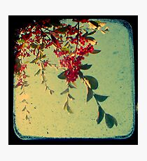 Good Morning - TTV Photographic Print