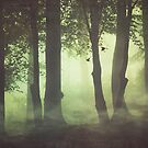 Wispy Forest Mists by Dirk Wuestenhagen