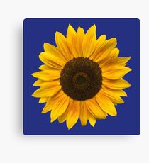Sunflower (Flower / Blossom / Sun) Canvas Print